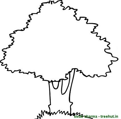 mango tree coloring pages