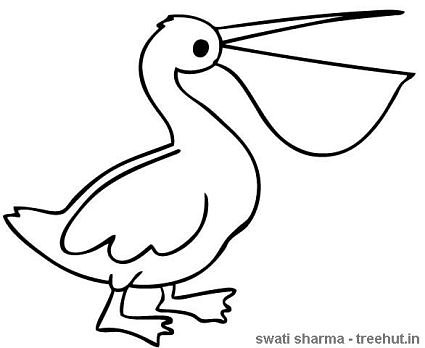 pelican coloring page birds of india